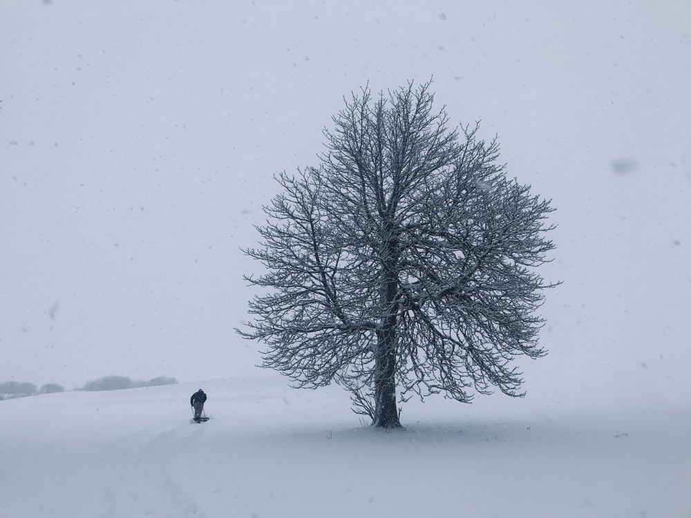 person standing beside tree during snow