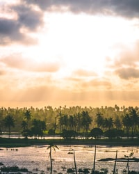 landscape photograph of coconut palm trees beside body of water
