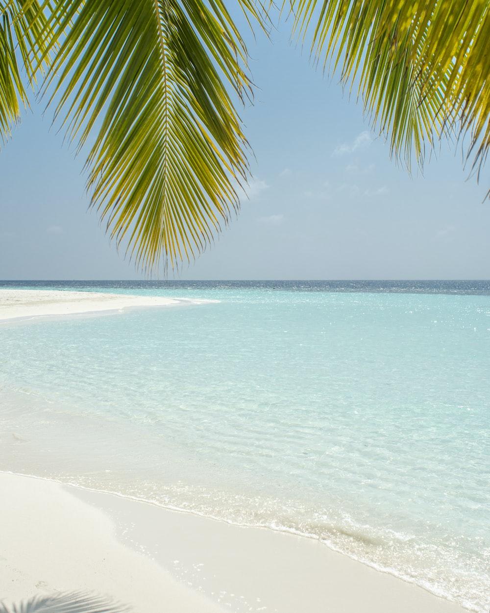 green coconut tree beside beach