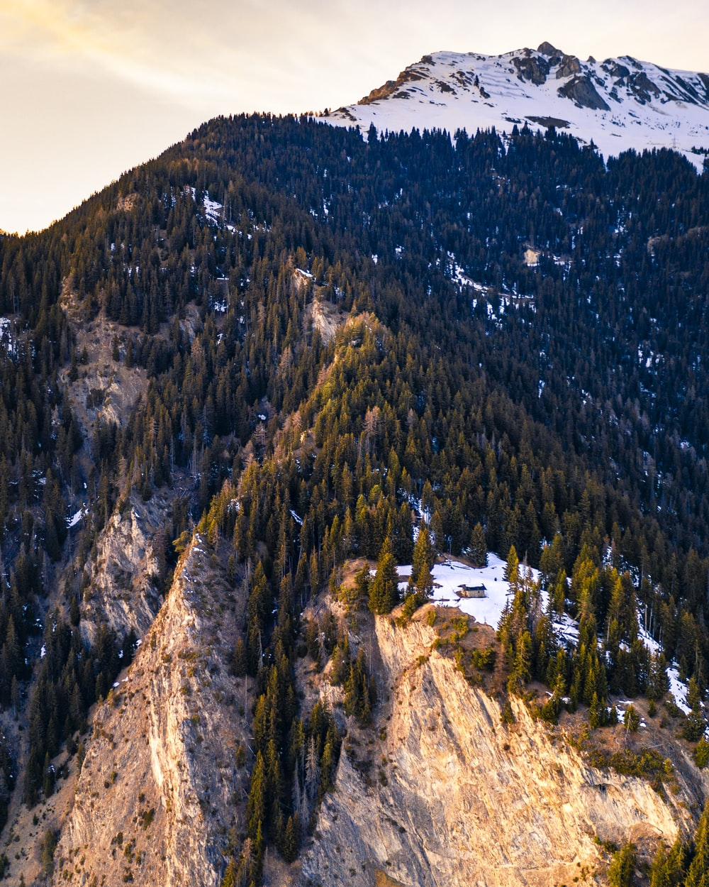 aerial photography of pine trees on mountain