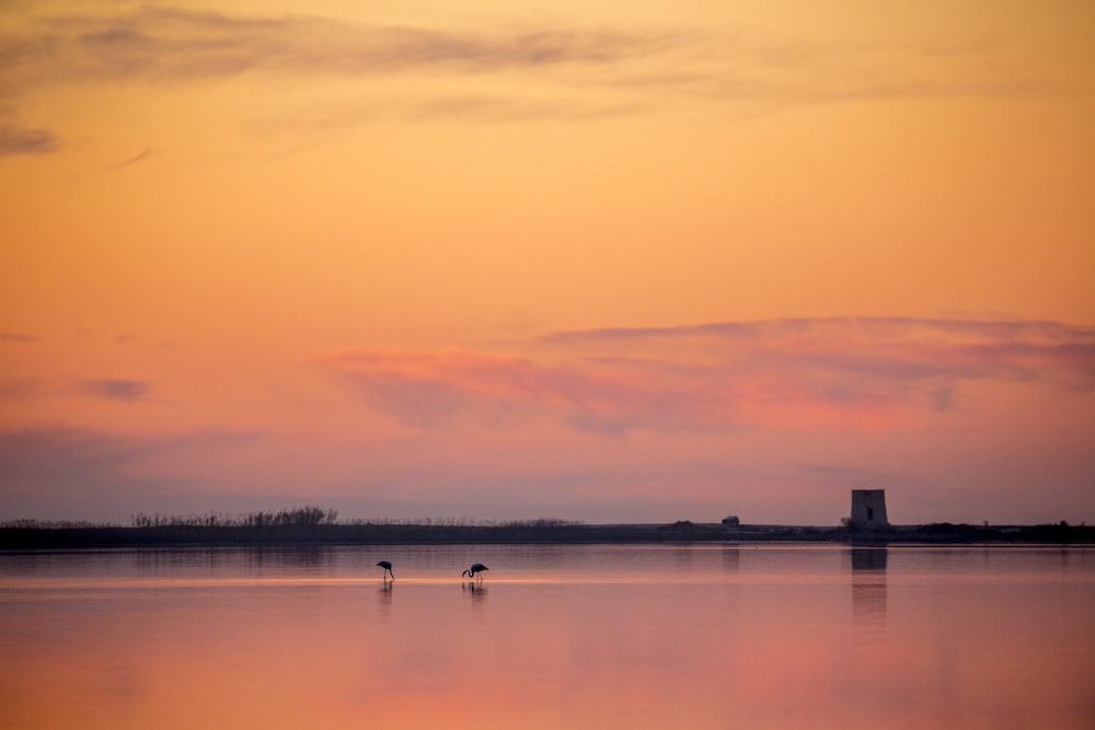two birds on seashore across horizon