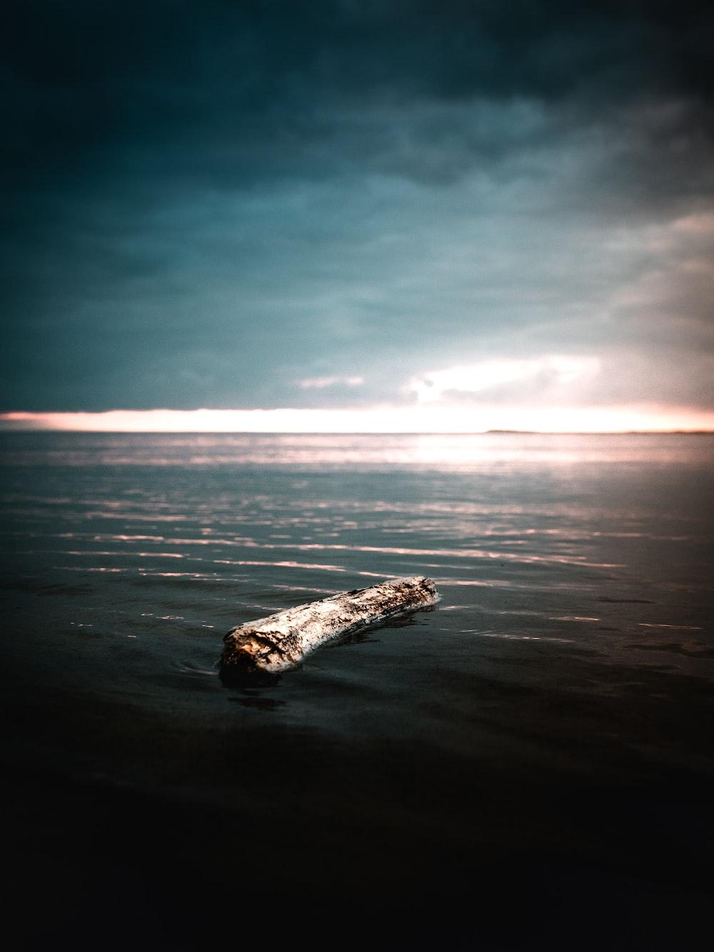 driftwood on sea