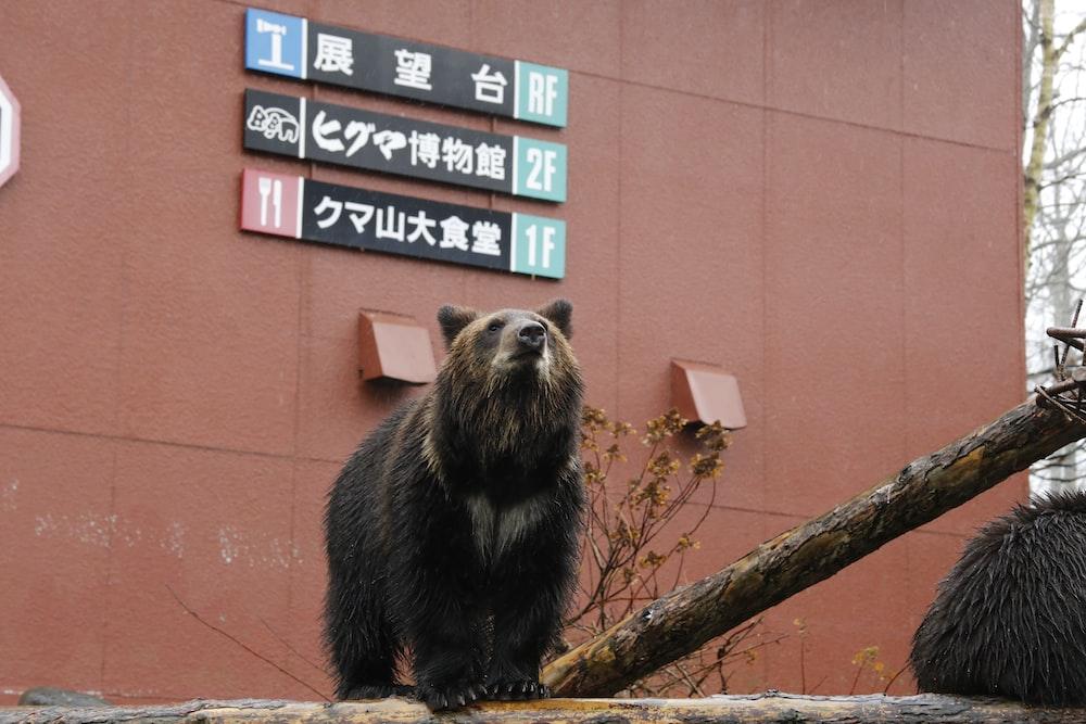 brown bear across signboards