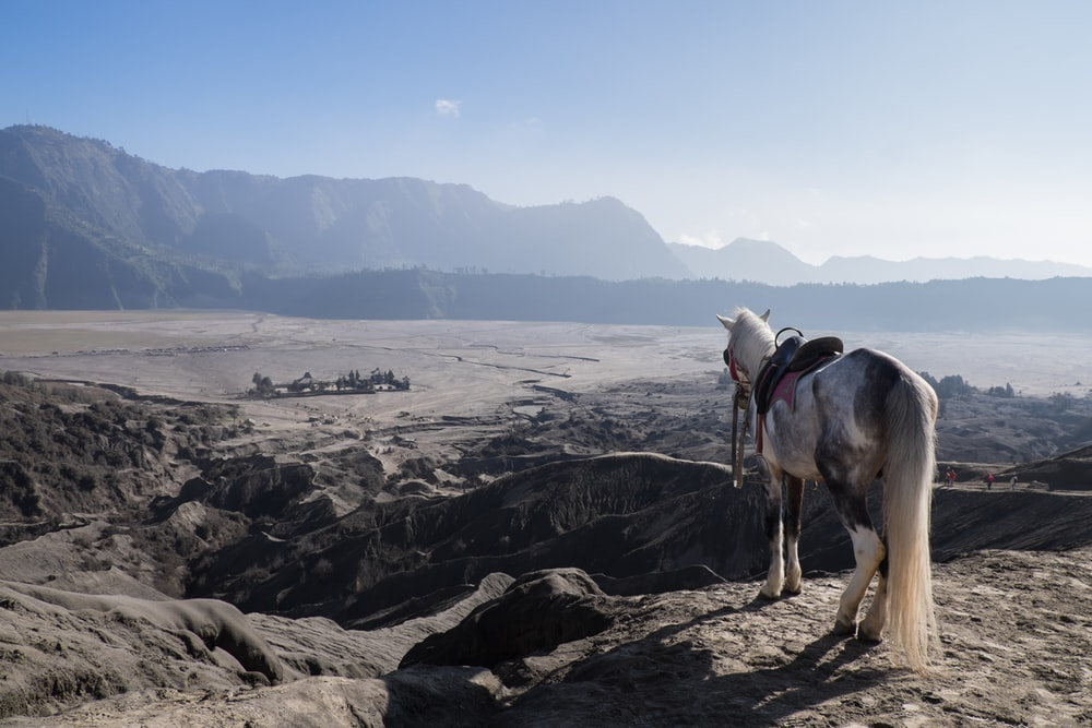 white horse standing on cliff