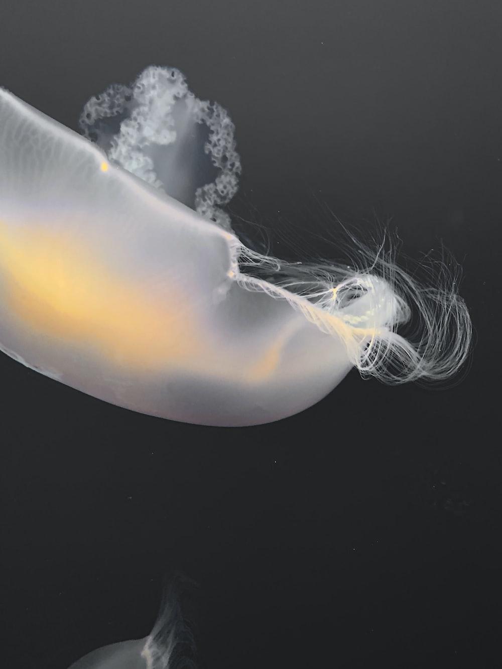 white jelly fish