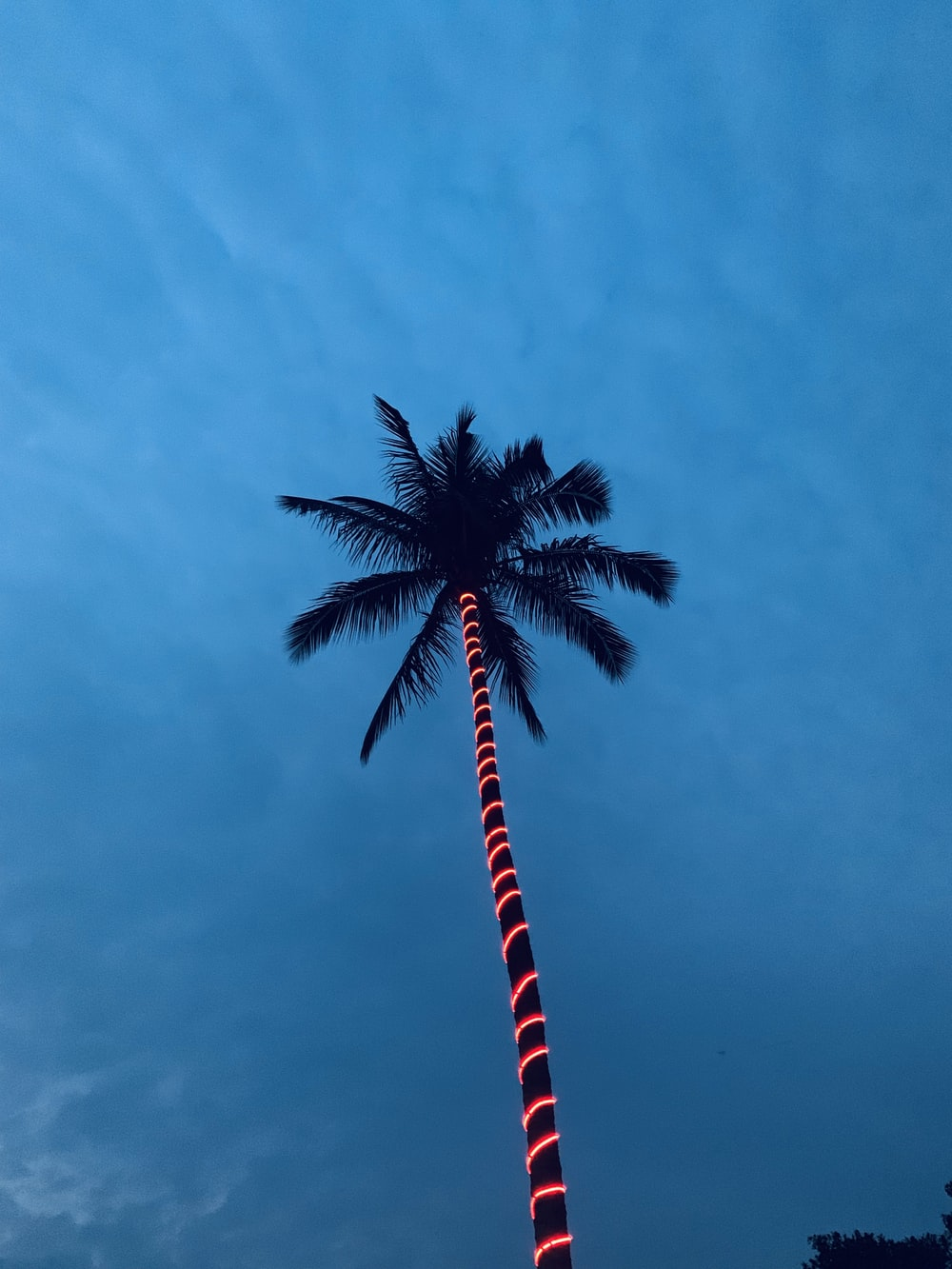 low-angle photography of coconut tree
