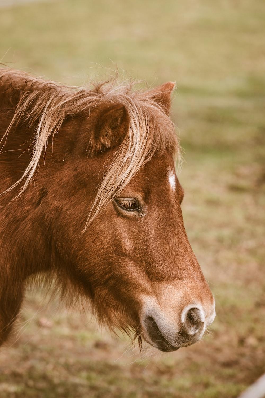 brown horse standing on grass field