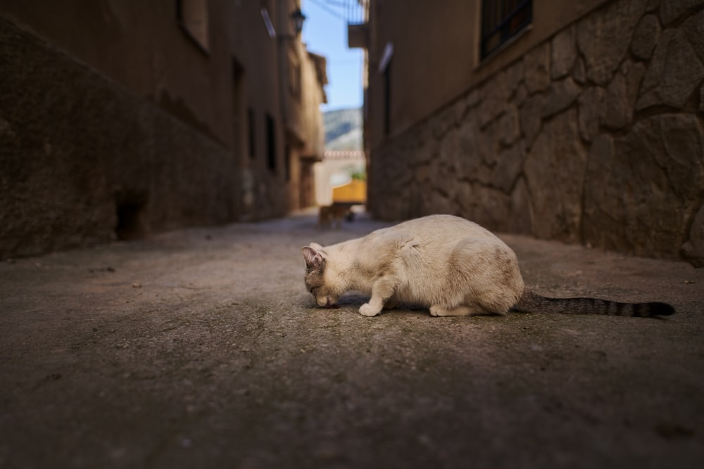 white cat between two buildings
