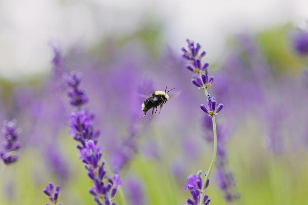bee near purple flower