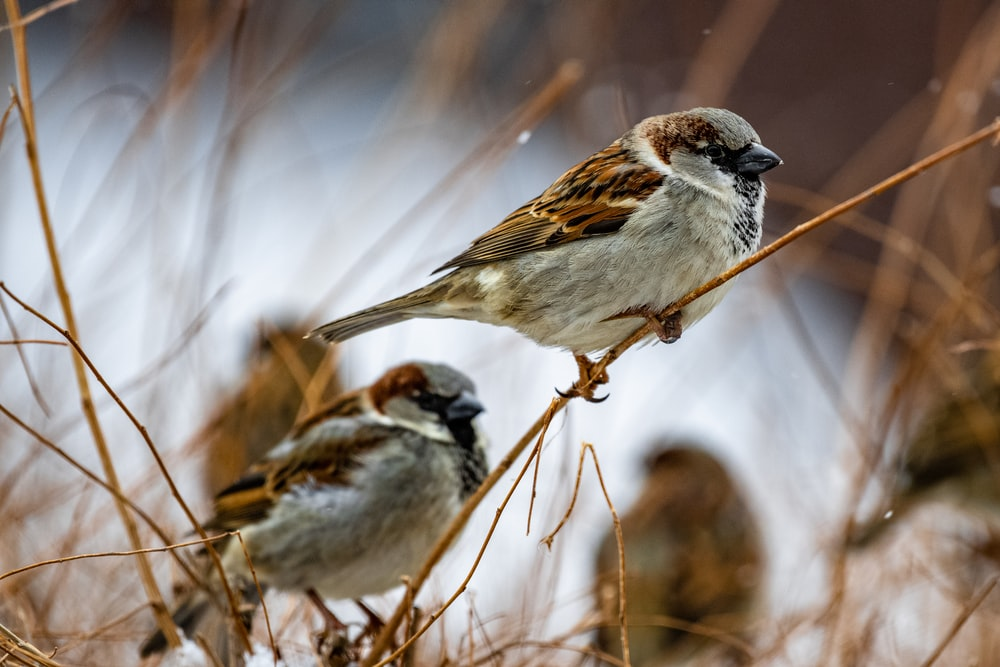 Sparrow Pictures | Download Free Images on Unsplash