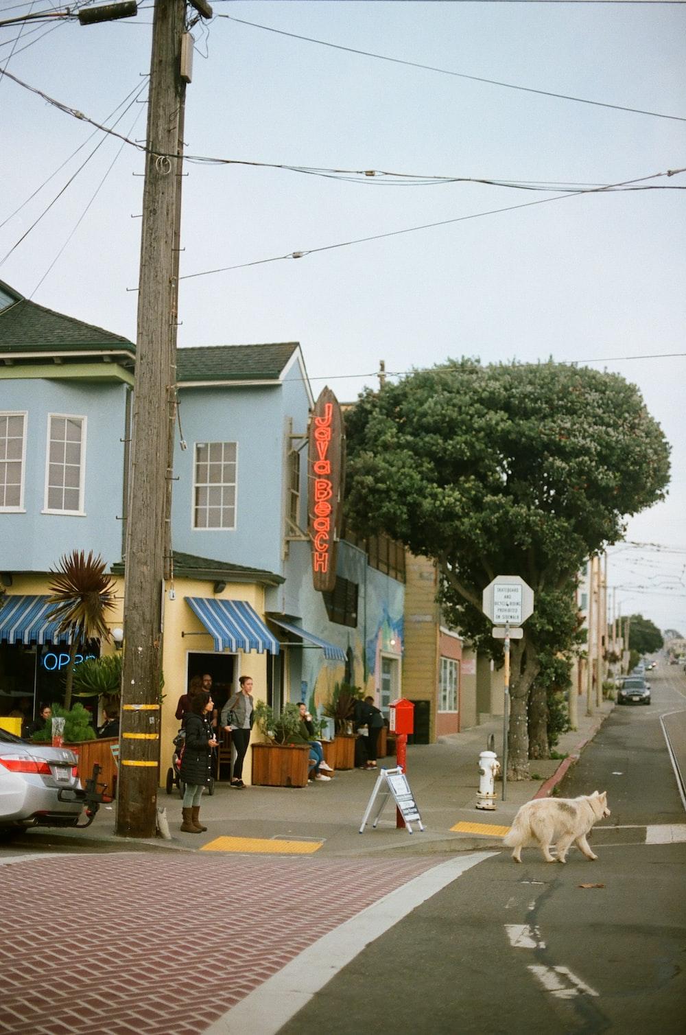 white dog on road near green tree