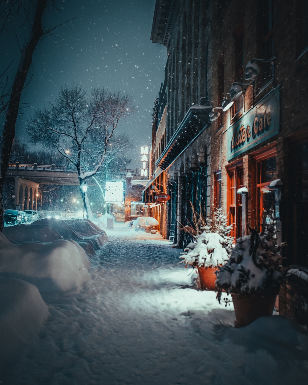 snow covered plant and road in front of cafe