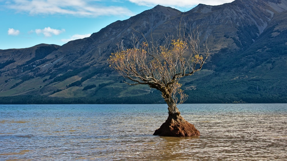 tree on body of water during daytime