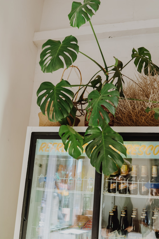 green-leafed plant on brown pot on top of beverage cooler