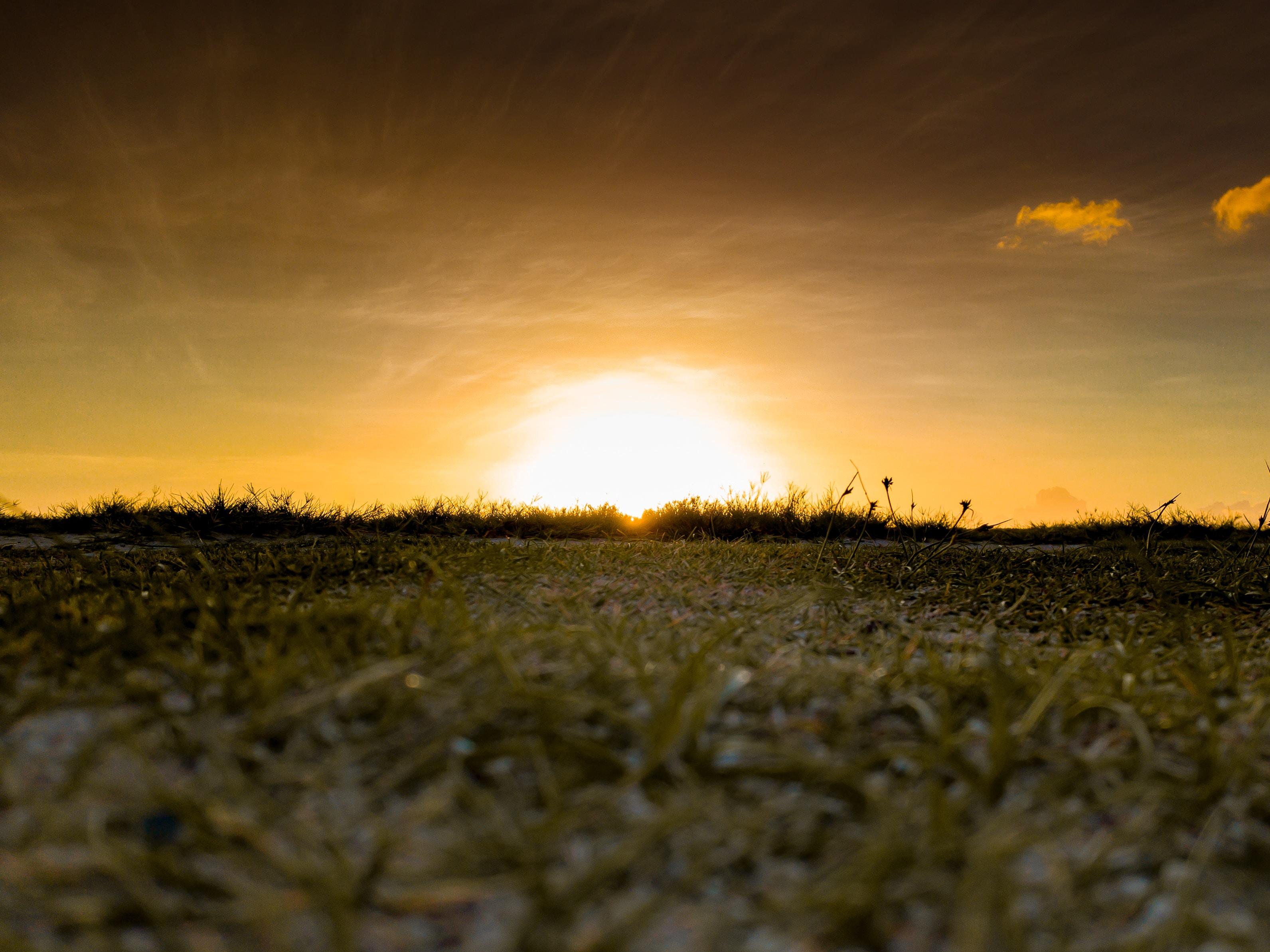 green grass lawn during sunset