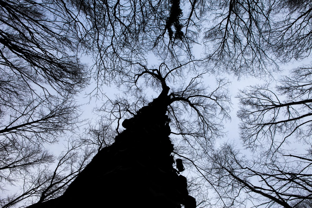 worm view photo of bare tree