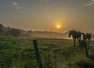 two brown horses on open field during sunrise