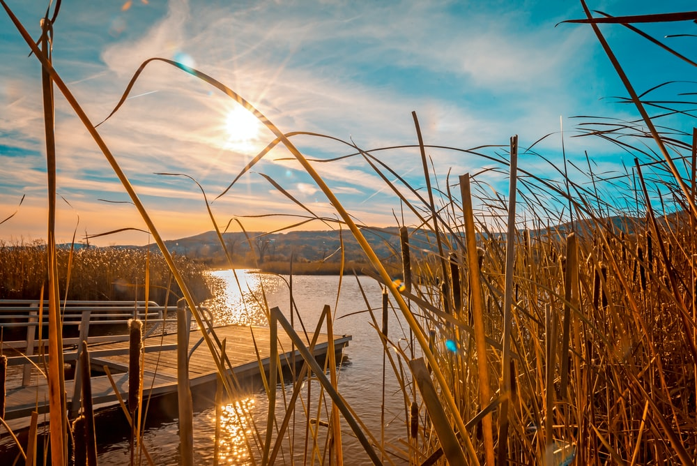 setting sun over empty wooden dock surrounded by grasses