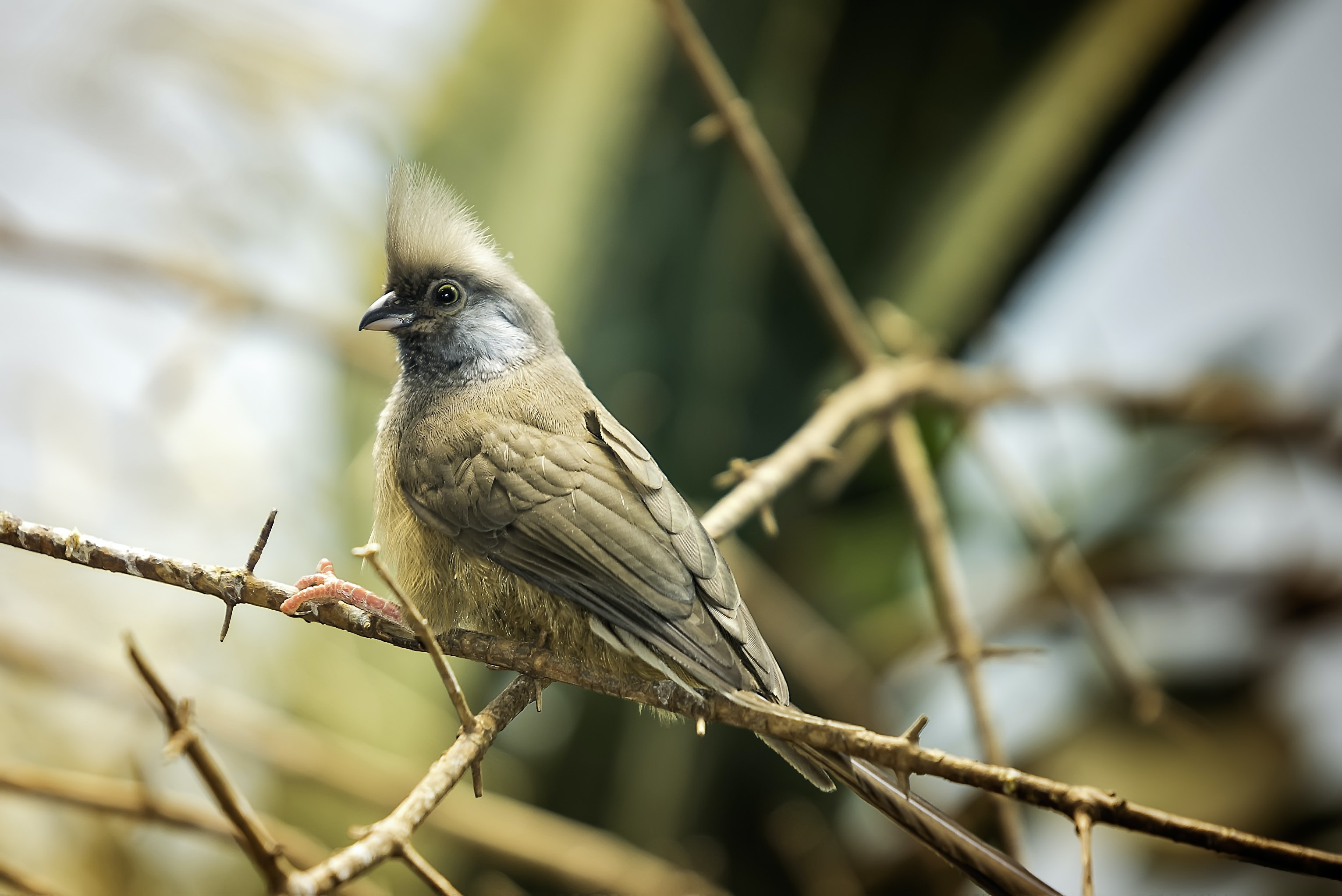 brown bird on brown stem