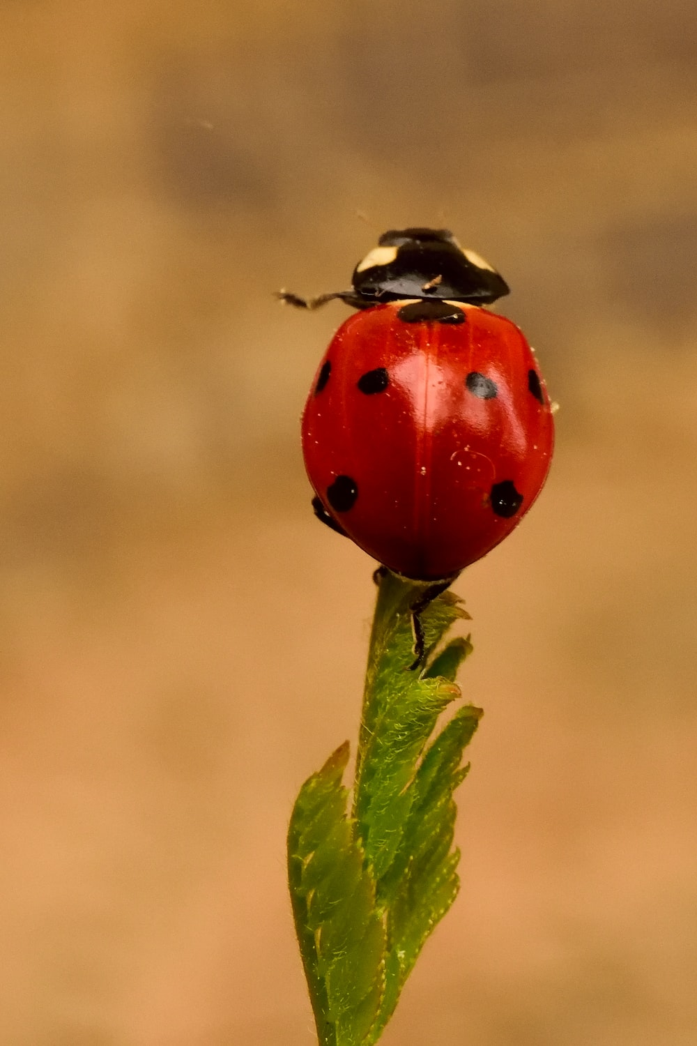 close-up photography of ladybug perching on green leafed