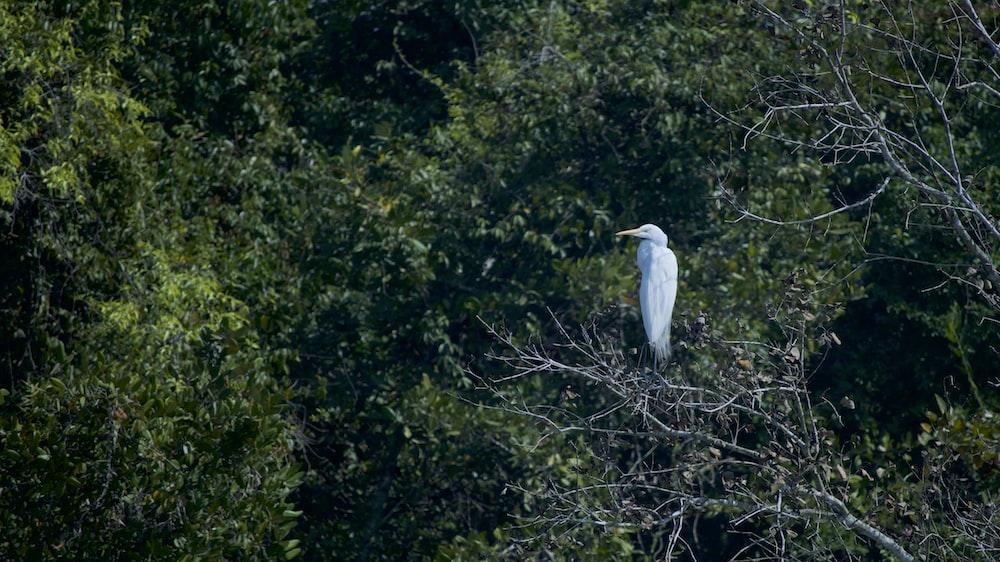white bird porhces on trees