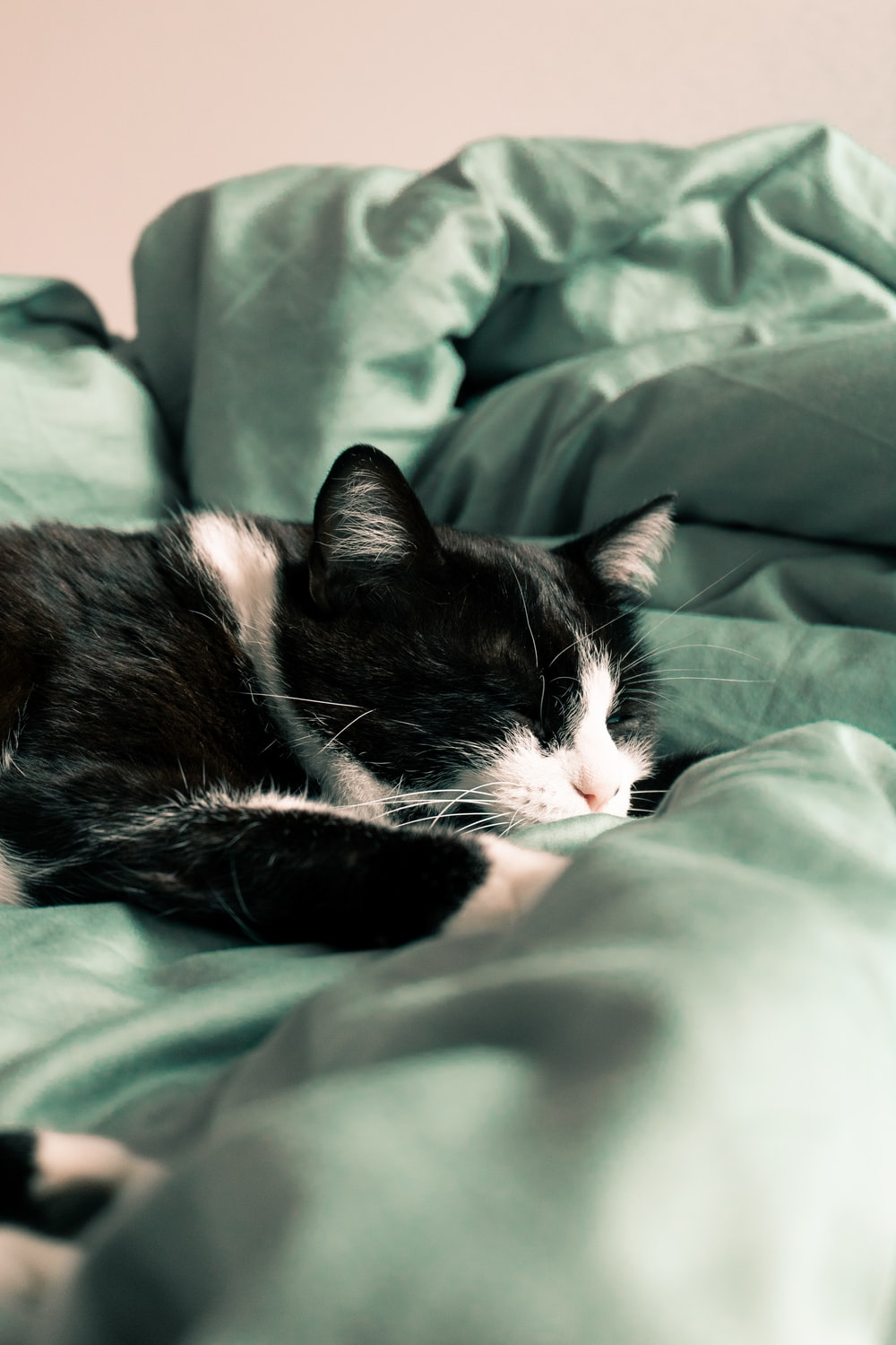 black and white cat sleeping on green textile