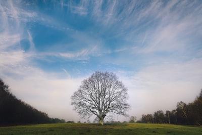 leafless tree tree teams background