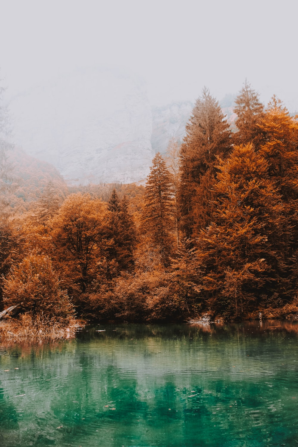 blue lake surrounded by brown leafed trees