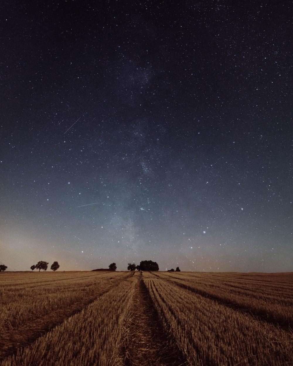rice field under constellation