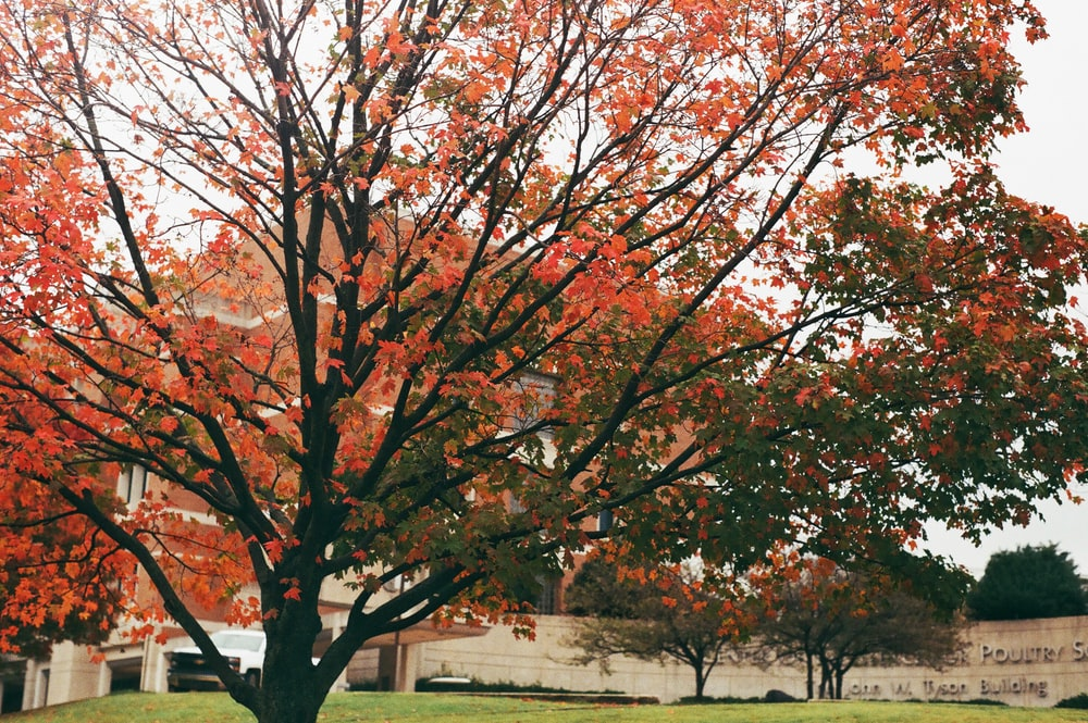 Red Colored Leaves On Trees At The Lawn Photo Free Plant Image