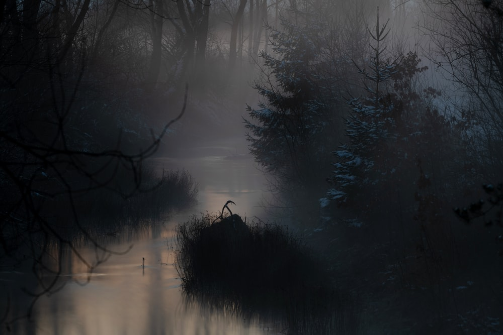 grey fog covering creek at the woods
