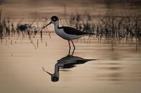 long beak bird on body of water