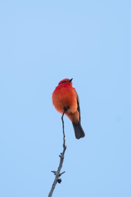red bird under white sky