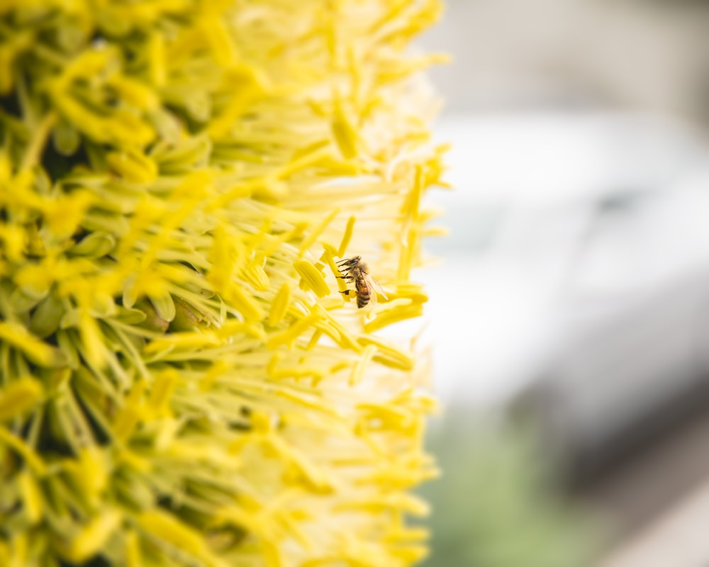 selective focus photography of wasp on yellow petaled flowers
