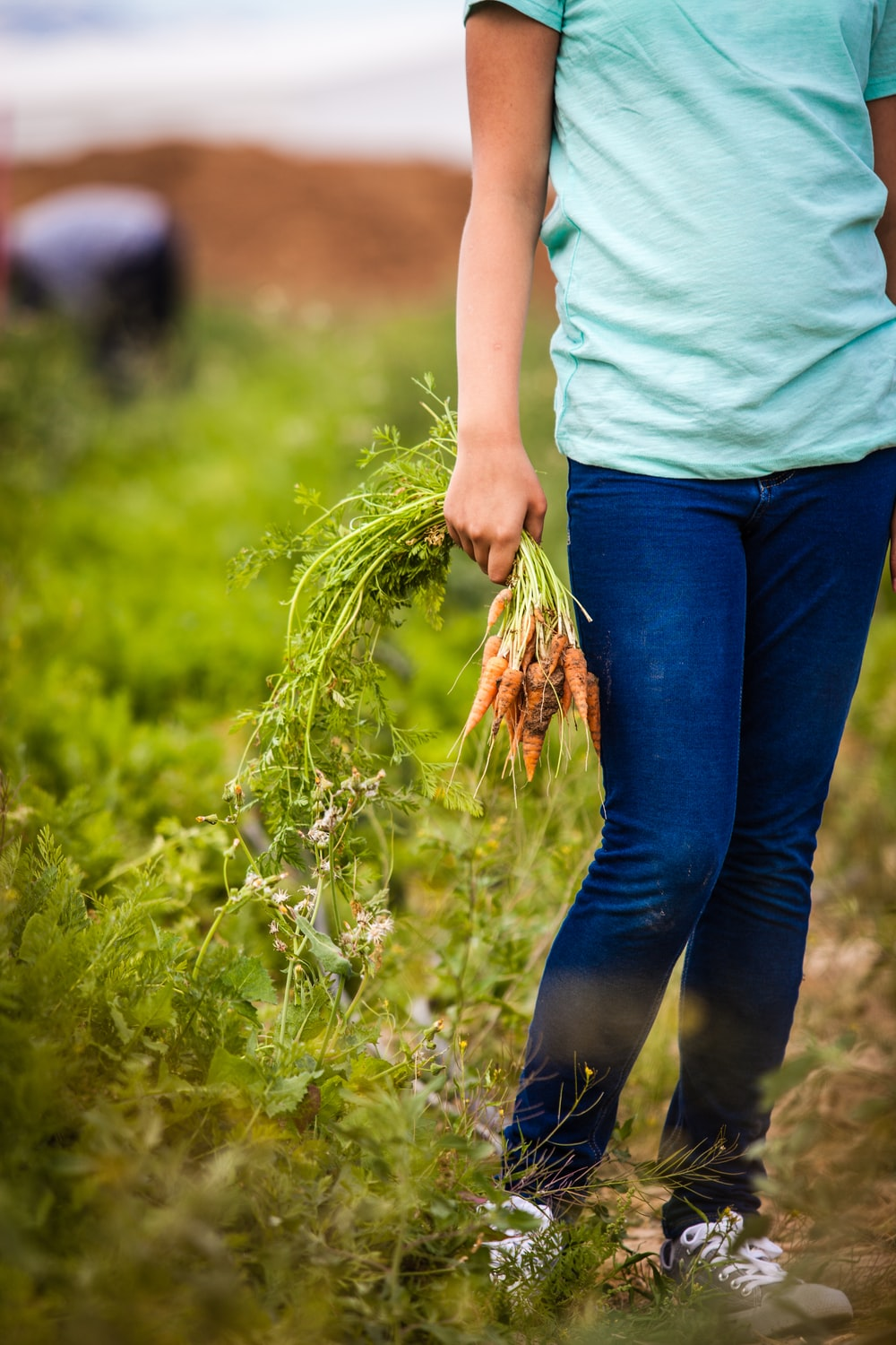 person picking carrots outdoor during daytime
