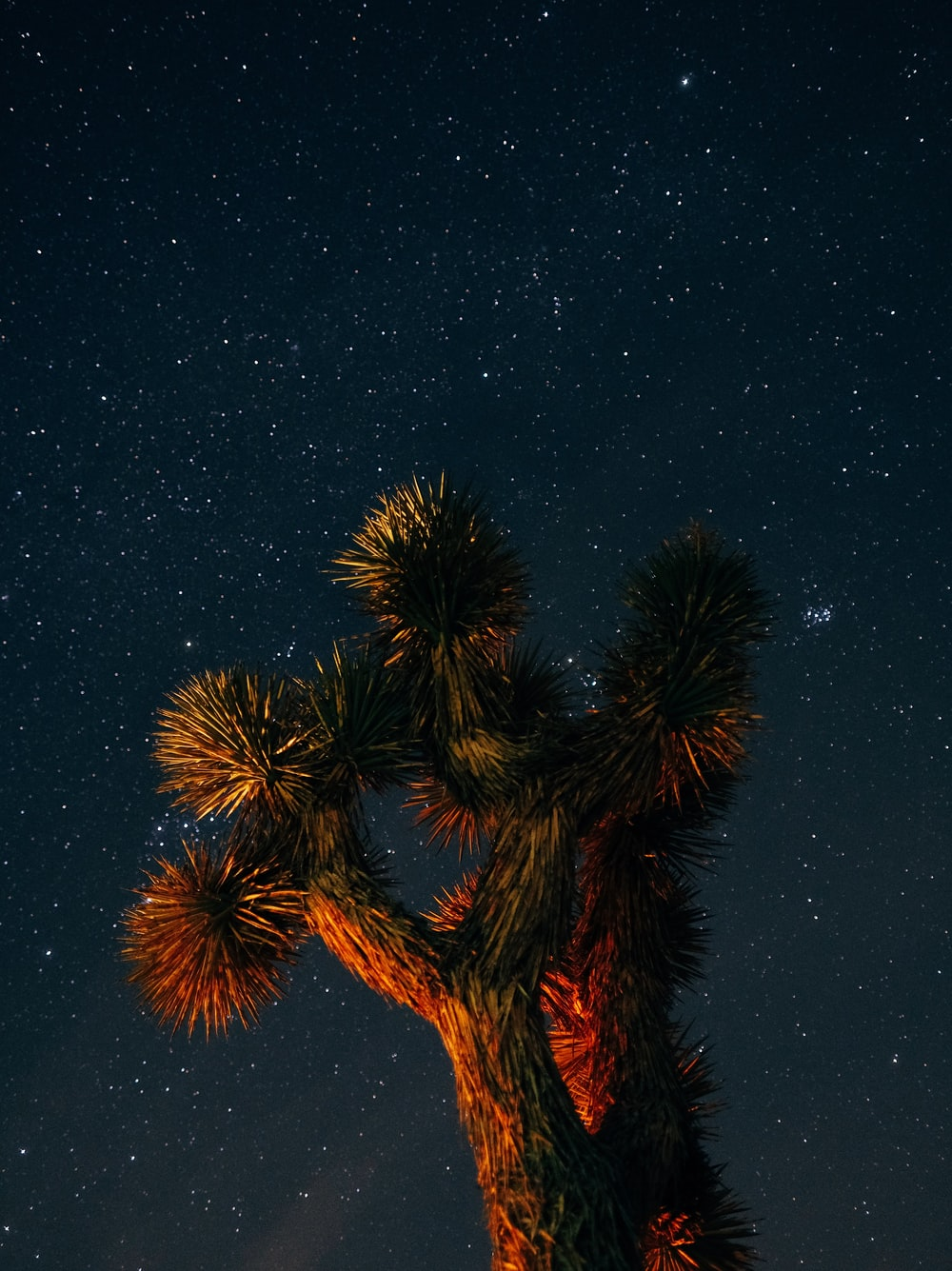 brown cactus plant at night time