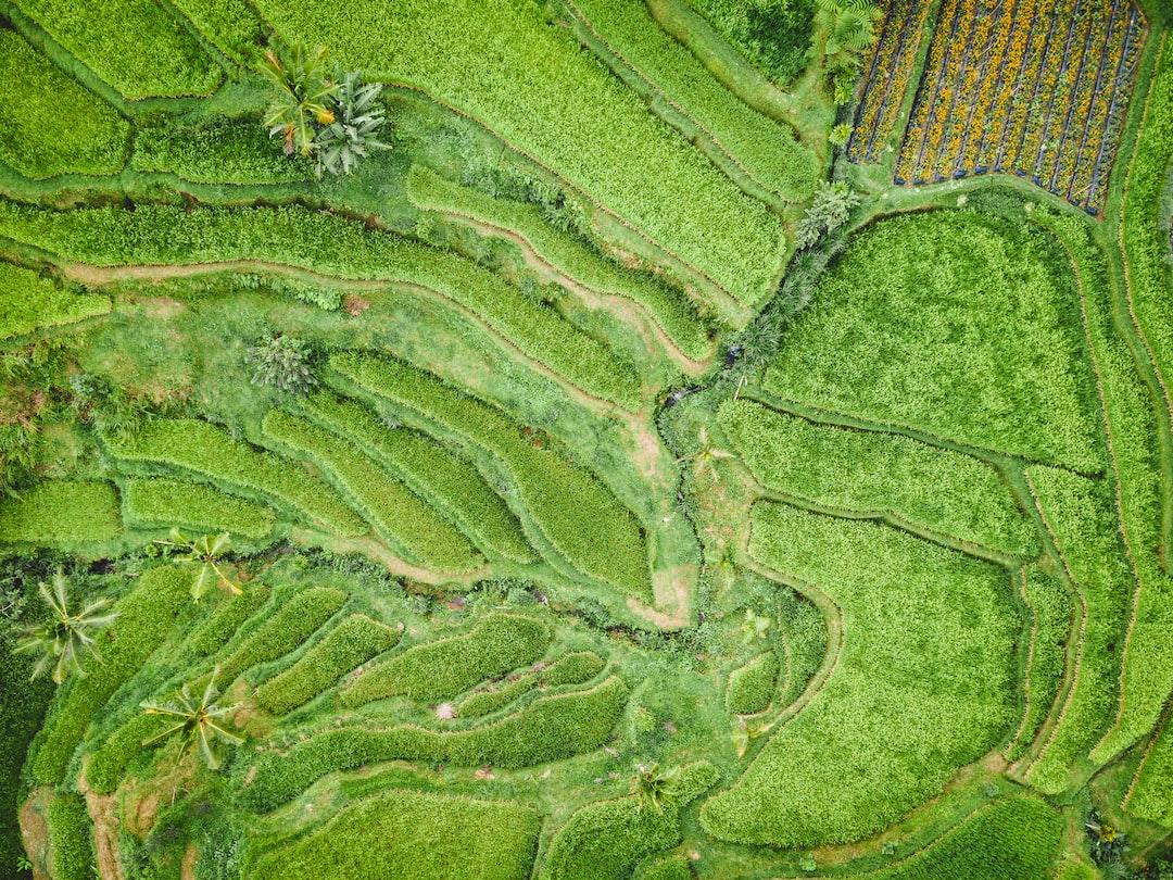 Green plateau