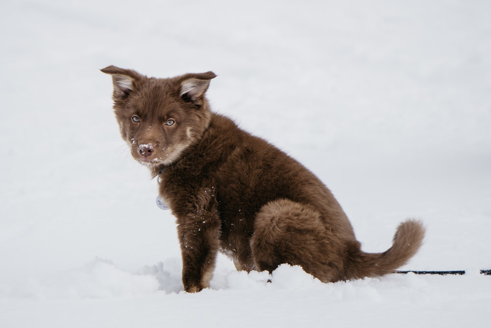long-coated brown puppy on snow covered surface