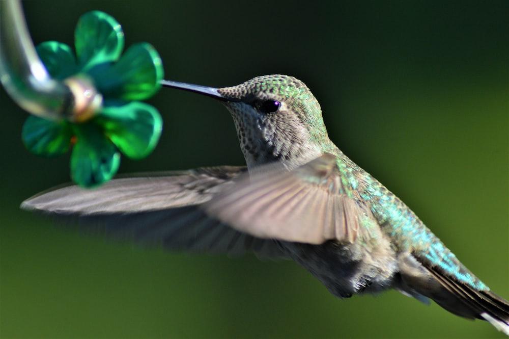 close up photography of hummingbird