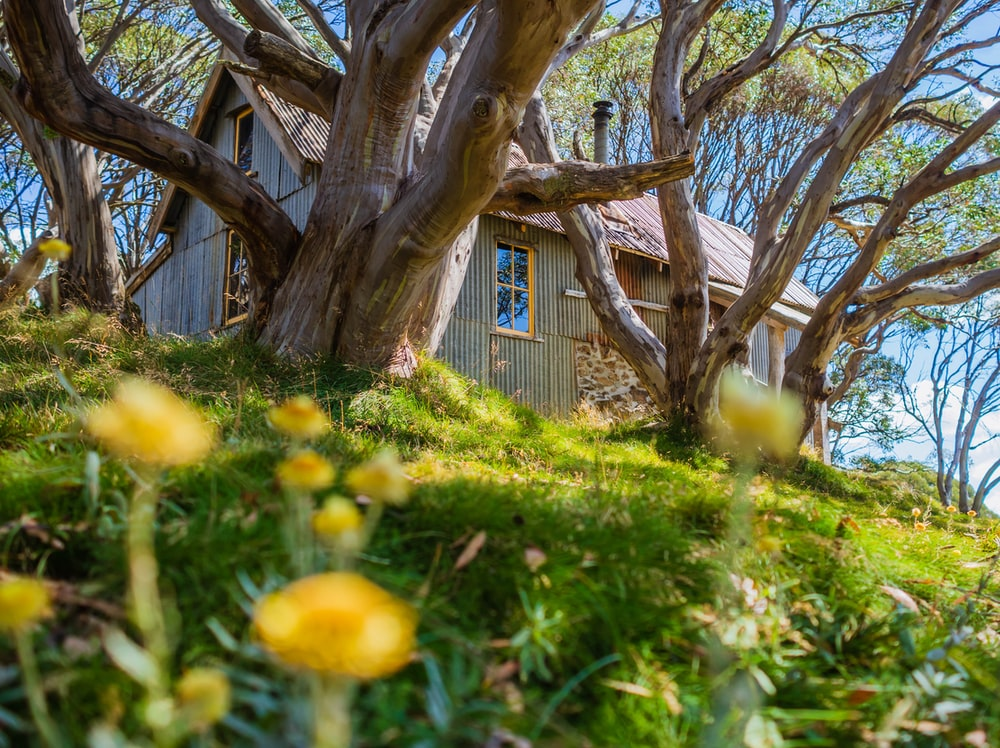 yellow petaled flowers and brown house