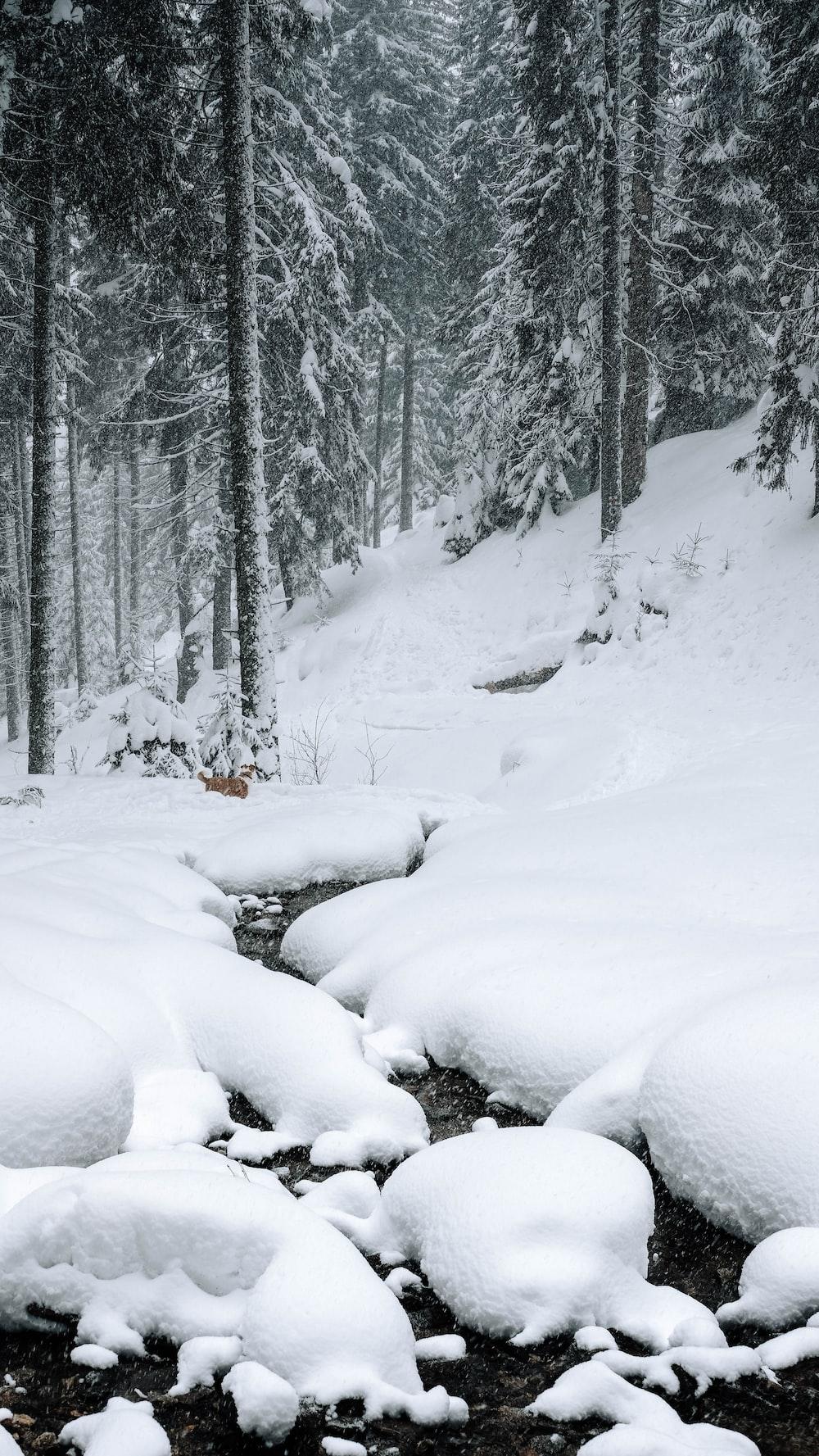 river between snowfield