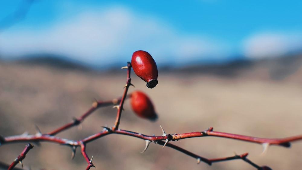 round red berry