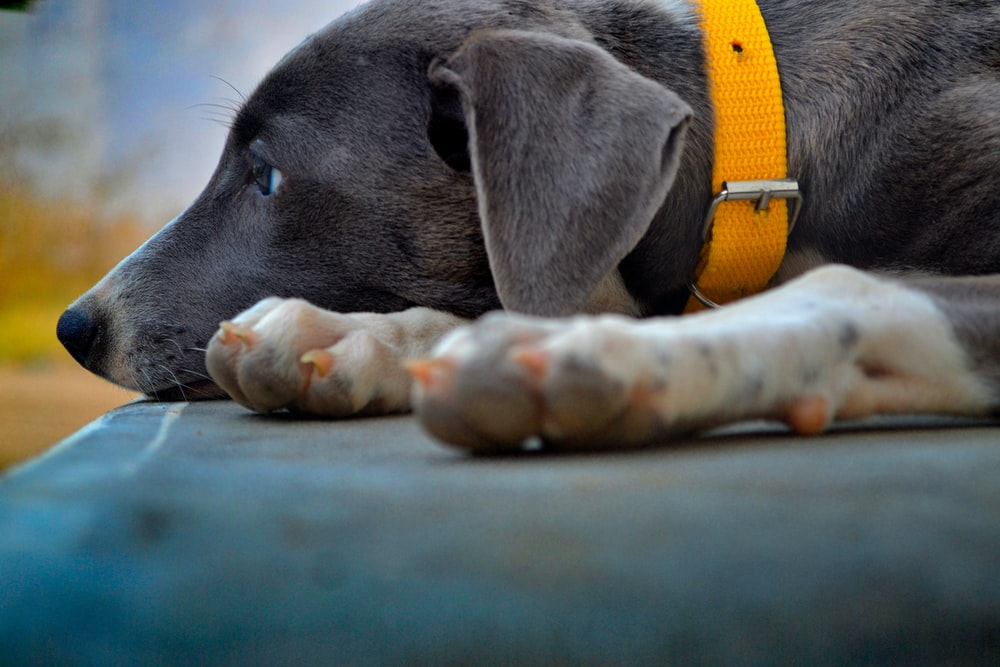 close-up photography of black dog