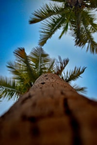 low angle view of coconut tree
