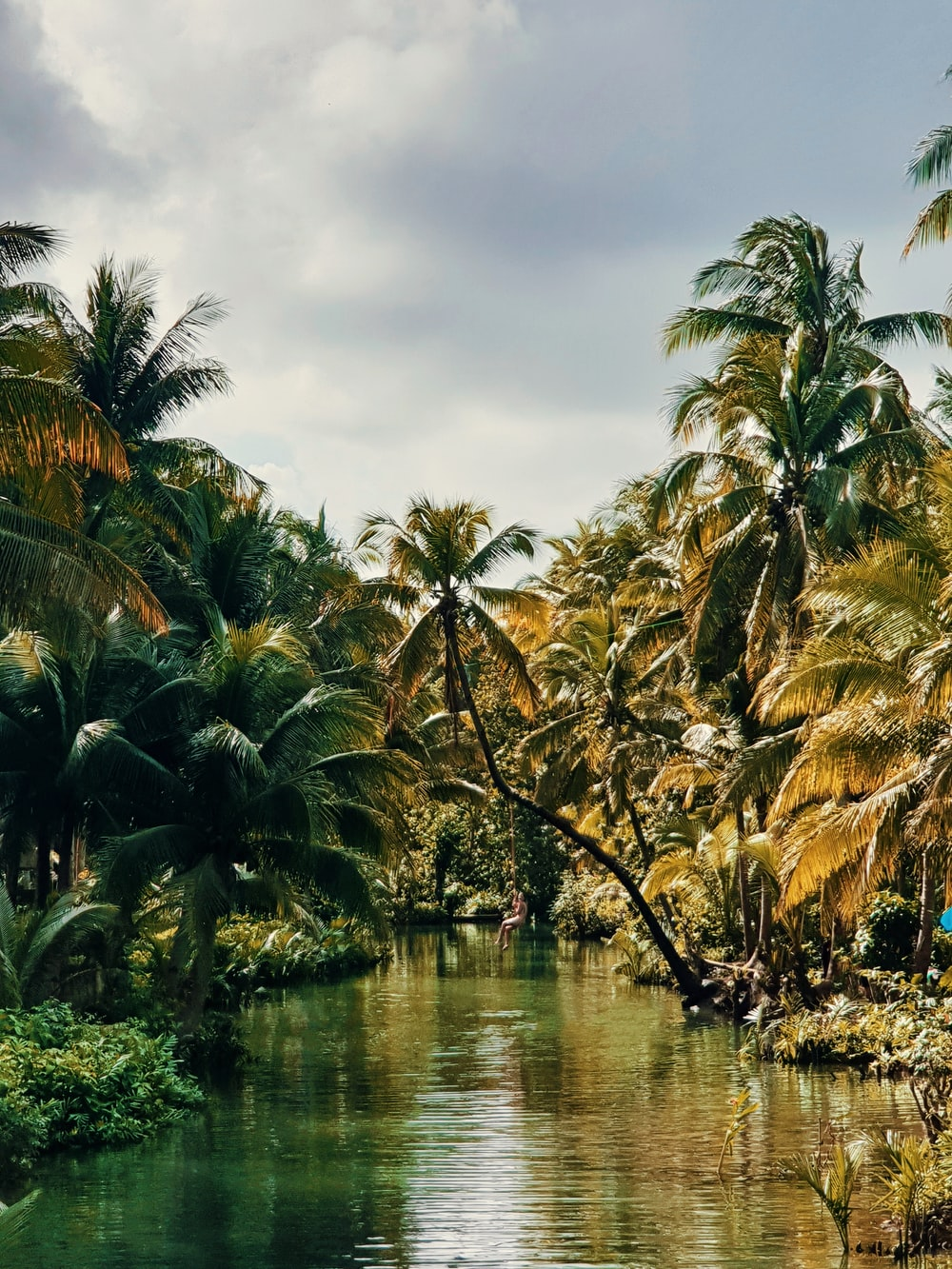 palm trees beside river