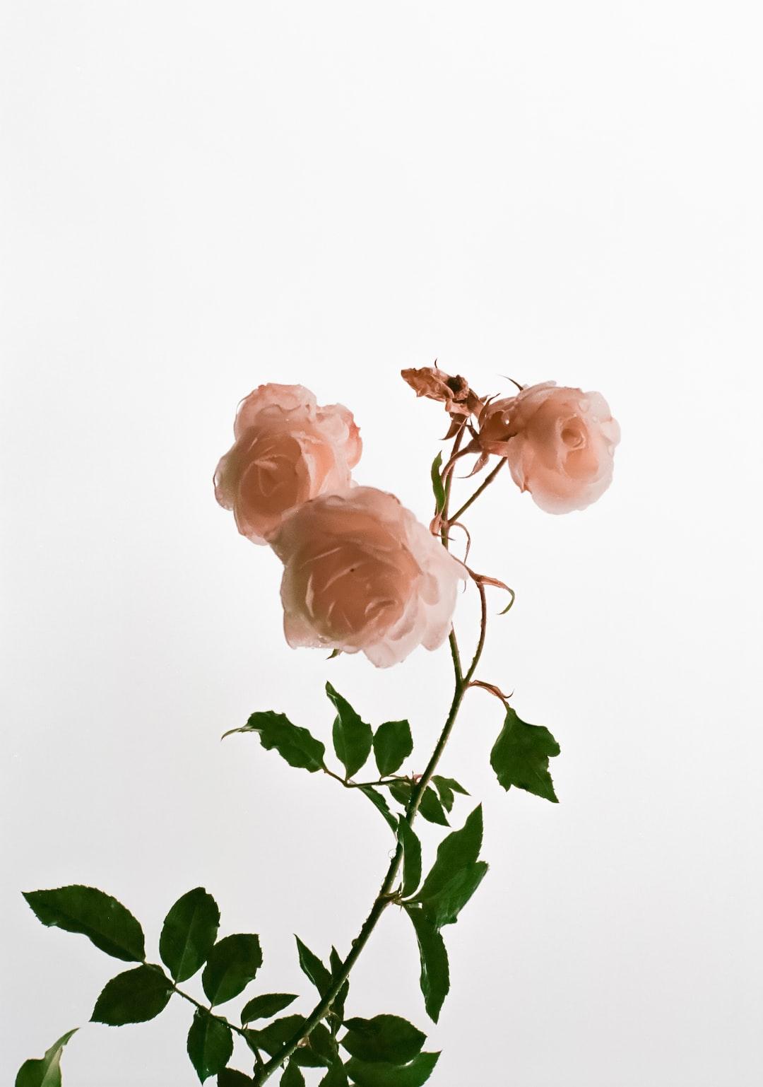 Flowers after a rainstorm. On Ektar 100.
