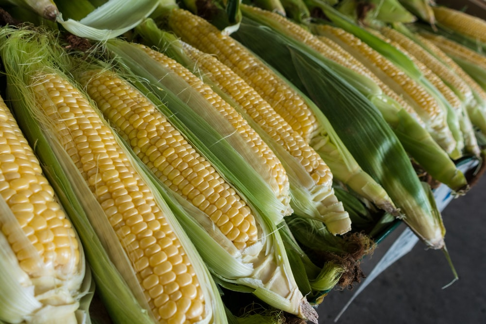 closeup photography of corns