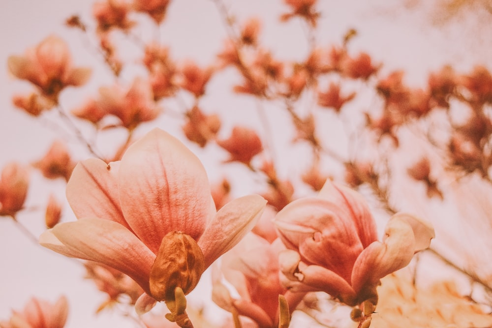 closeup photography of flowers