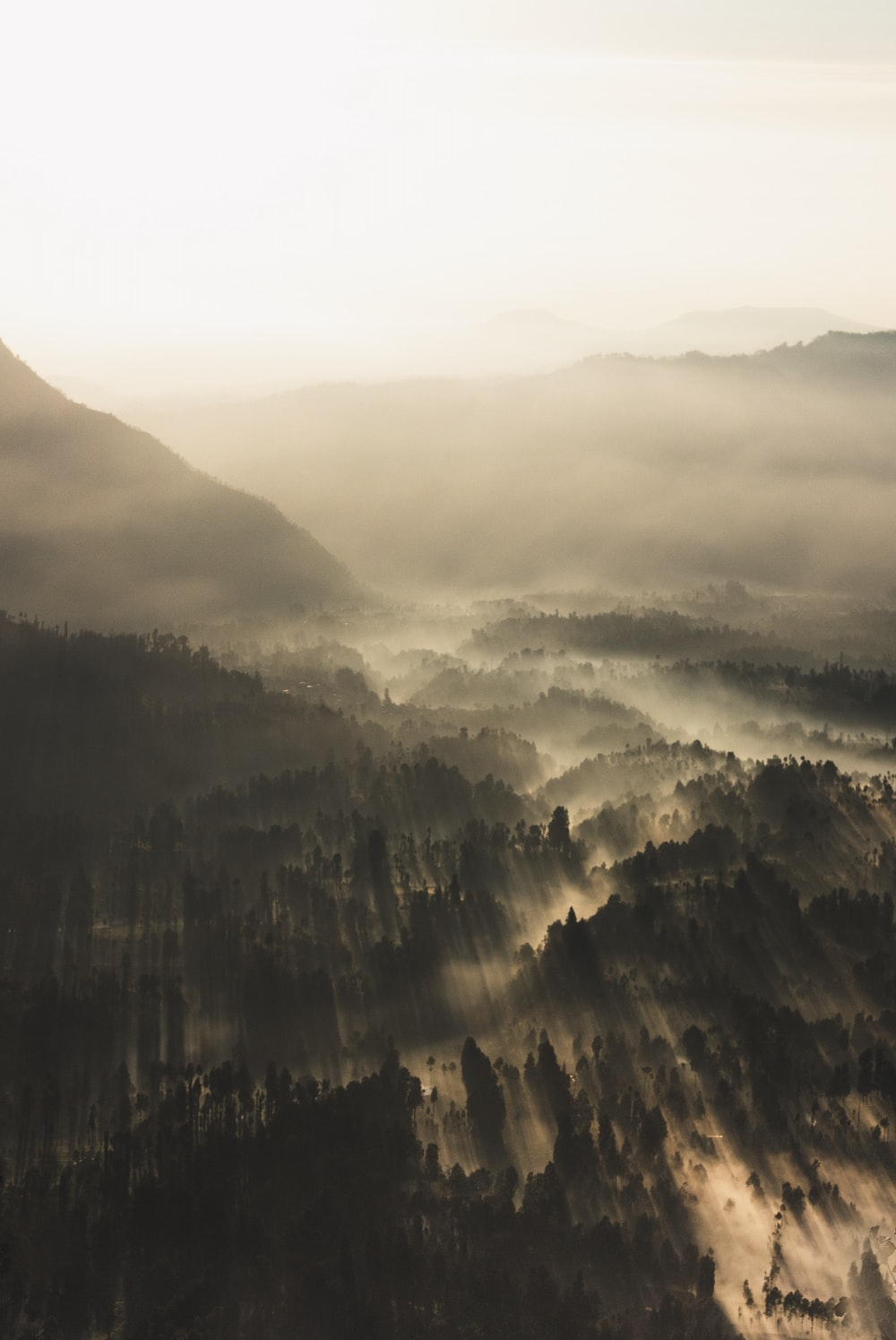 forest surrounded by fogs during daytime