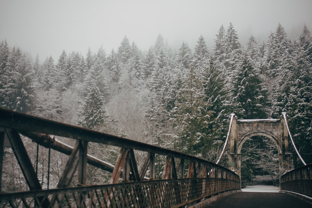 brown metal bridge near green leaf trees